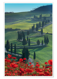 Poster  Winding road and poppies, Montichiello, Tuscany, Italy, Europe - Angelo Cavalli