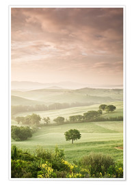 Poster  Single tree at sunrise, Val D'Orcia, Province Siena, Tuscany, Italy - Markus Lange