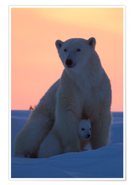 Poster  Polar bear and cub - David Jenkins