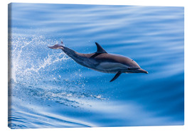 Tableau sur toile  Long-beaked common dolphin leaping - Michael Nolan