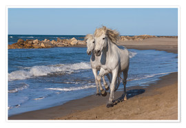 Poster  Camargue horses on the beach