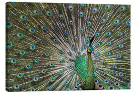 Toile  Java green peafowl (Pavo muticus) - Gabrielle & Michel Therin-Weise