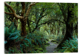 Tableau en verre acrylique  Primeval forest on kepler track, fiordland, new zealand - Peter Wey