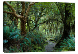 Tableau sur toile  Primeval forest on kepler track, fiordland, new zealand - Peter Wey
