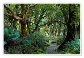 Poster  Primeval forest on kepler track, fiordland, new zealand - Peter Wey