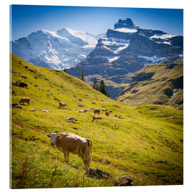 Tableau en verre acrylique  Cow in the Swiss Alps - Jan Schuler
