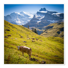 Poster Cow in the Swiss Alps