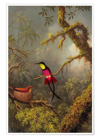 Poster  Couple de colibris topaze - Martin Johnson Heade