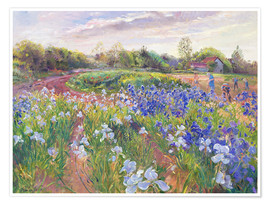 Poster  Field of flowers - Timothy Easton