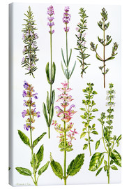 Toile  Rosemary and other herbs - Elizabeth Rice