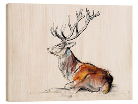 Bois  Lying Stag - Mark Adlington