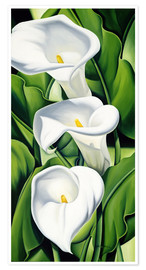 Poster  Lily - Catherine Abel