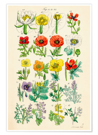 Poster Fleurs sauvages Fig. 41-60