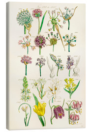 Toile  Wildflowers, Sowerby 1281-1300 - Ken Welsh