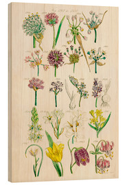 Bois  Wildflowers, Sowerby 1281-1300 - Ken Welsh