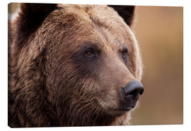 Toile  Portrait du grizzly - Doug Lindstrand