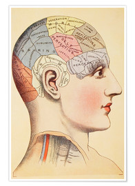 Poster  Carte du cerveau humain (anglais) - Wunderkammer Collection