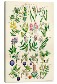 Tableau sur toile  Fleurs sauvages Fig. 341-360 - Sowerby Collection
