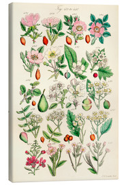 Tableau sur toile  Fleurs sauvages Fig. 421-440 - Sowerby Collection