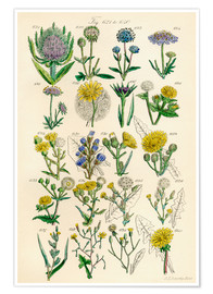 Poster  Fleurs sauvages Fig. 621-640 - Sowerby Collection