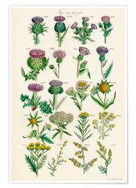 Poster  Fleurs sauvages Fig. 681-700 - Sowerby Collection