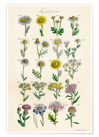 Poster  Fleurs sauvages Fig. 741-760 - Sowerby Collection