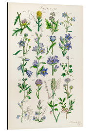 Alu-Dibond  Wildflowers, Sowerby - Ken Welsh