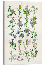 Toile  Wildflowers, Sowerby - Ken Welsh