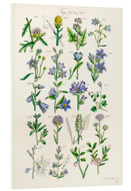 Forex  Fleurs sauvages, Sowerby - Ken Welsh
