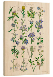 Bois  Wildflowers, Sowerby - Ken Welsh