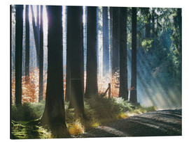 Tableau en aluminium  Morning Light in the Forrest - Martina Cross