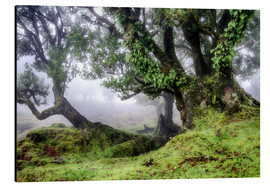 Tableau en aluminium  Fog within the Laurel forest, Madeira, Portugal - Circumnavigation