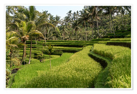 Poster  Bali  rice terrace - Peter Schickert
