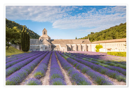 Poster Famous Senanque abbey with lavender field, Provence, France