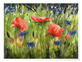 Poster Three poppies