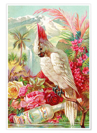 Poster  Cocktail Cockatoo - Advertising Collection