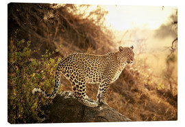 Toile  female Leopard at sunset - Jürgen Ritterbach