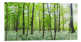 Tableau en PVC  A forest in springtime with wild garlic - Benjamin Butschell