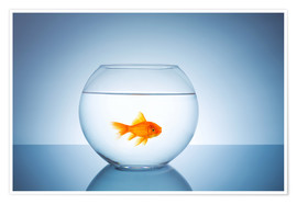 Poster  Fishbowl with goldfish - rclassen
