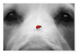 Poster  Ladybug on Dog Nose - Gabi Stickler