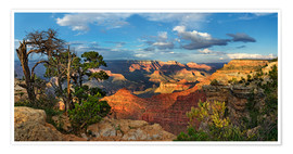 Poster  Grand Canyon avec un pin noueux - Michael Rucker