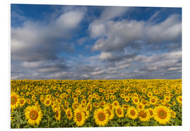 Tableau en PVC  Sea of Sunflowers - Achim Thomae