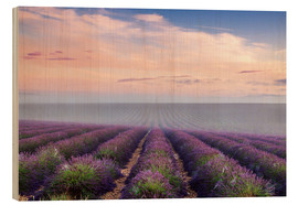 Bois  Landscape: lavender field in summer at sunrise, Provence, France - Matteo Colombo