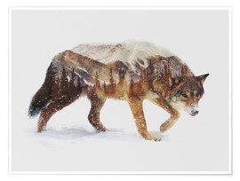 Poster  Arctic Wolf - Andreas Lie