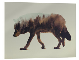 Tableau en verre acrylique  Norwegian Woods The Wolf - Andreas Lie
