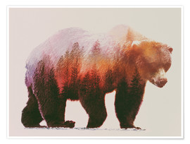 Poster  brownbear - Andreas Lie