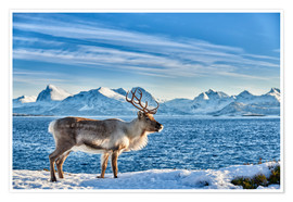 Poster  Reindeer in snow covered landscape at sea - Jürgen Ritterbach