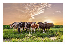 Remco Gielen - beautiful sunset cows gathering