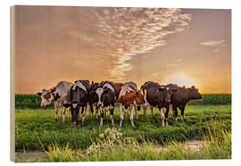 Bois  beautiful sunset cows gathering - Remco Gielen
