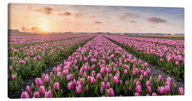 Tableau sur toile  tulips fields holland - Remco Gielen